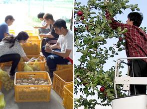 夏季収穫実習