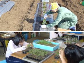 作物生産管理実習