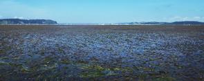 寒流域における海洋生物・生態系の統合的教育共同利用拠点