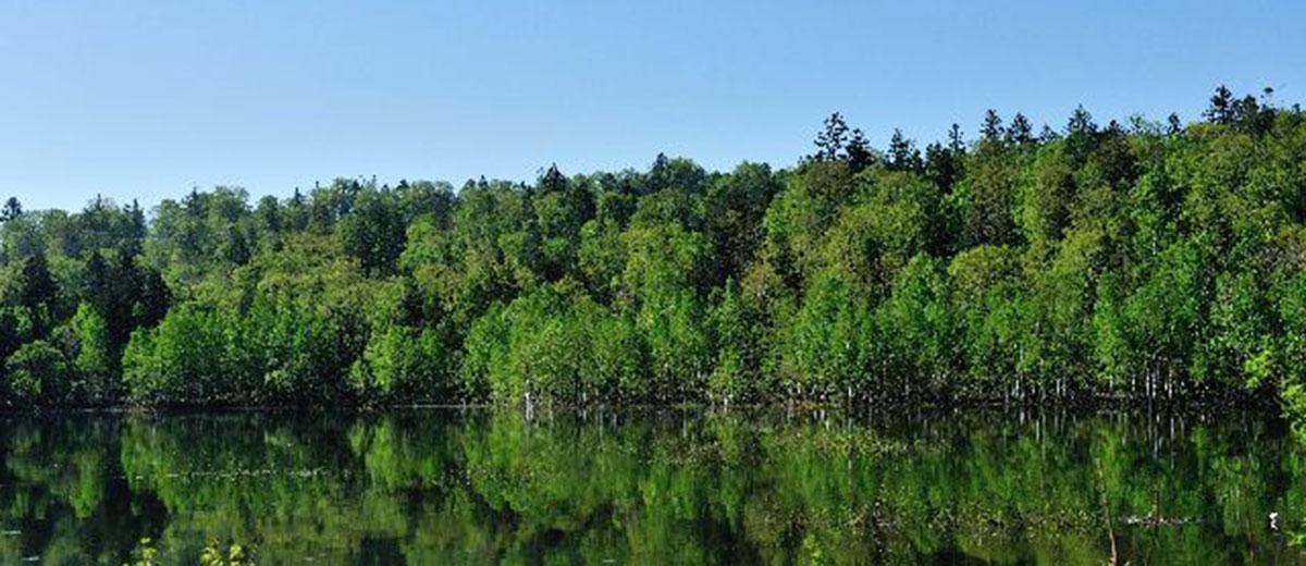 雨龍研究林 | FSC - 海から山ま...