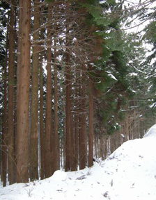 Hiyama Experimental Forest