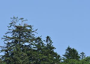 Nakagawa Experimental Forest