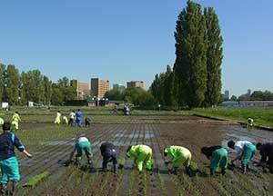 生物生産研究農場