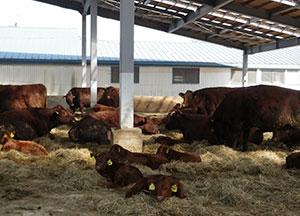 Shizunai Livestock Farm