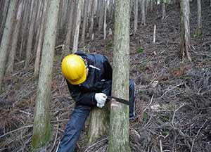 和歌山研究林