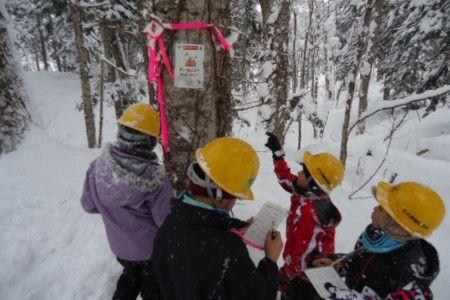冬の森を探検中