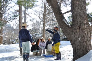 冬の植物園ウオッチング・ツアー